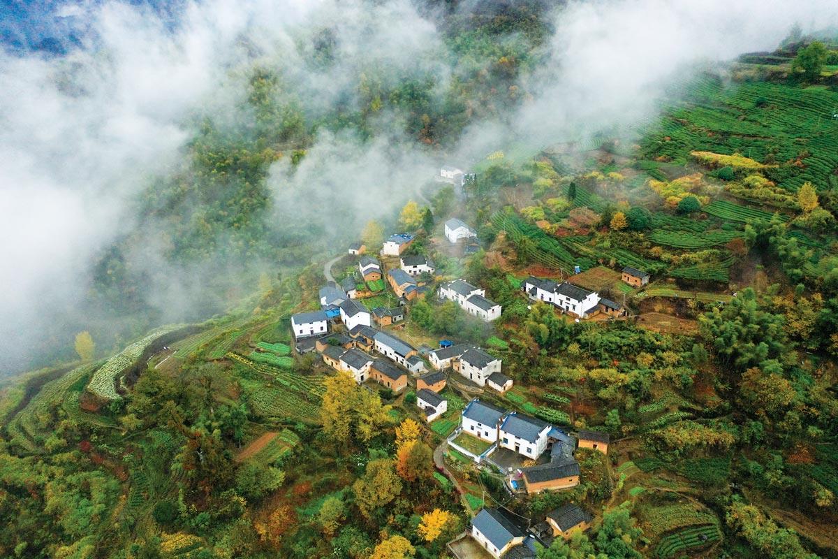 Tea-travel_Huangshan
